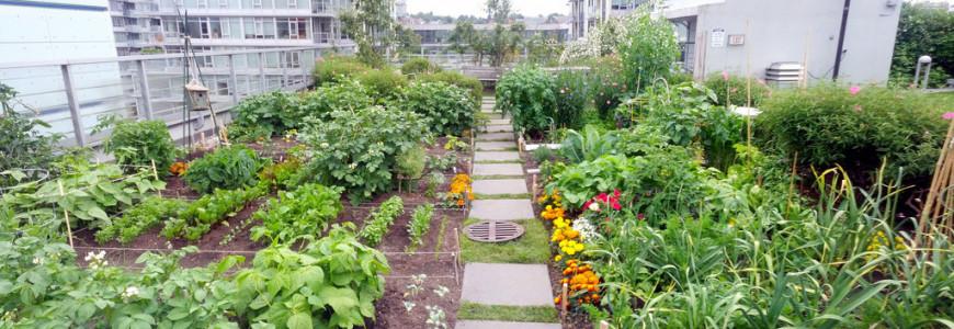 Gemüsegarten auf einem Dach