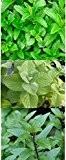 3 Arten - Apfelminze + Grüne Minze + Echte Pfefferminze - 750 Samen