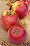 Apfelbaum, Jonagold, Halbstamm, Kernobst, Apfel grün, ca. 175 cm, im Kübel, mit Dünger, Malus domestica, Obstbaum winterhart, EVRGREEN