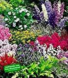 BALDUR-Garten Buntes Staudenbeet 'Multi-Colour', Staudengarten, Stauden-Sortiment 12 Pflanzen