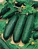 Bobby-Seeds Gurkensamen Marketmore Freilandgurke Portion