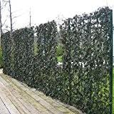 Efeu Sichtschutz Toller Garten