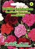 Gefüllte Landnelken Grenadin Mischung Dianthus caryophyllus