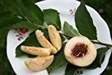 Pfirsich pflanzen - Toller Garten