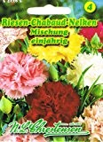 Riesen-Chabaud-Nelken Mischung Dianthus caryophyllus