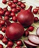 Steckzwiebeln Red Baron 500 g